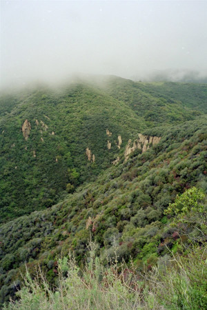 East Topanga Canyon Fire Road, 19, fog rolling in - April 2006